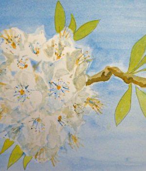 Chris Galpin Gean Blossom (Medium)